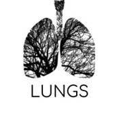 Beginner's quiz for Lung